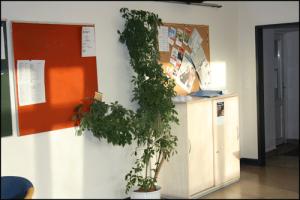 Berufseinstiegsbegleitung-Schule-Emden