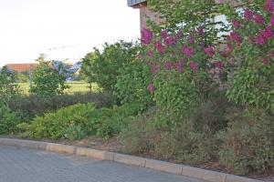 Garten-Pausenhof-Oberschule-Borssum